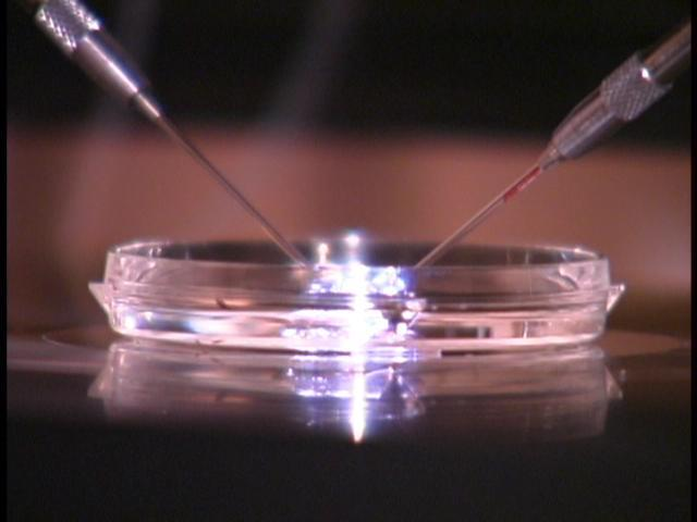 New Fertility Treatment Breakthrough