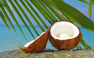Coconut-and-palm1